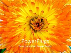 PowerPoint template displaying a closeup of a beautiful flower
