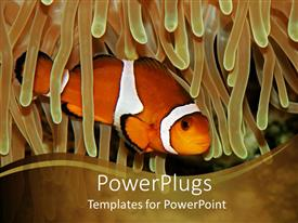 PowerPlugs: PowerPoint template with clown fish swimming through anemone on khaki background, fish in ocean water