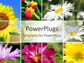 PowerPlugs: PowerPoint template with collage of the beautiful summer colorful flowers
