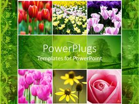 PowerPlugs: PowerPoint template with collage of colorful flowers red pink white yellow tulips, pink rose, yellow flowers, green trees