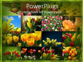 PowerPlugs: PowerPoint template with collage of colorful tulips, green border