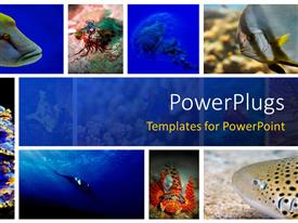 PowerPlugs: PowerPoint template with a number of figures related to sea life in the picture