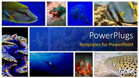 PowerPoint template displaying a number of figures related to sea life in the picture