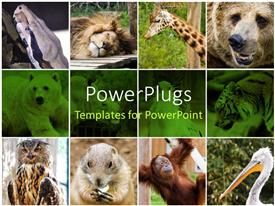 PowerPlugs: PowerPoint template with collage depiction of some wild animals