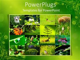 PowerPlugs: PowerPoint template with collage of environment with wild animals and plants in green background
