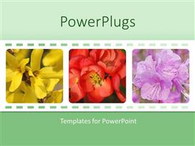 PowerPlugs: PowerPoint template with collage of three depictions of beautiful colorful flowers, yellow, red, purple flowers
