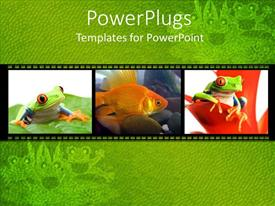 PowerPlugs: PowerPoint template with collage of three depictions of little green frogs on leaves and goldfish in water