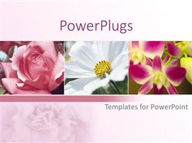 PowerPlugs: PowerPoint template with a collection of different kinds of flowers  with pinkish background