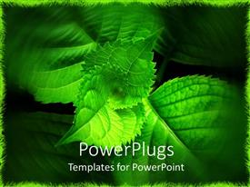 PowerPlugs: PowerPoint template with a collection of fresh leaves with green background