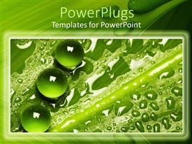 PowerPlugs: PowerPoint template with a collection of green leaves and water drops on top of them