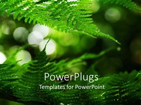 PowerPlugs: PowerPoint template with a collection of leaves with their reflection in the background
