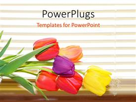 PowerPoint template displaying colored tulip flowers on desk over white background with horizontal lines