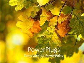 PowerPlugs: PowerPoint template with colorful autumn leaves on a tree on a colorful background