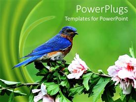 PowerPoint template displaying a colorful bird with sitting on a branch