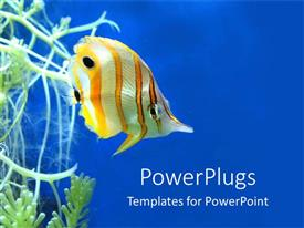 PowerPoint template displaying colorful fish close up under the ocean in blue background