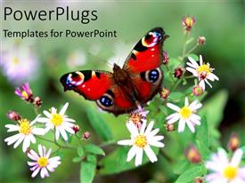 PowerPlugs: PowerPoint template with colorful red butterfly perched on flowers