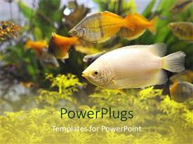 PowerPoint template displaying colorful view inside a busy aquarium