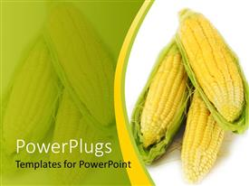 PowerPoint template displaying corn on the cob