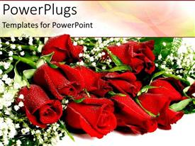 PowerPoint template displaying a couple of red roses with greenery in the background