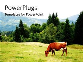 PowerPoint template displaying cow grazing on grassy field in mountain setting with forest trees
