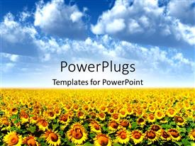 PowerPlugs: PowerPoint template with a crop of sunflowers with clouds in background