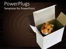 PowerPlugs: PowerPoint template with cute hamster peeking out of white box, ripple background