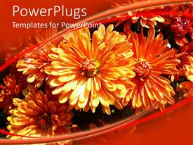 PowerPlugs: PowerPoint template with cute orange colored flowers grows together