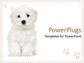 PowerPoint template displaying cute sad white puppy on white background