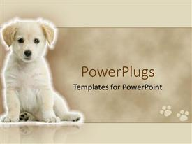 PowerPoint template displaying cute white Labrador retriever puppy