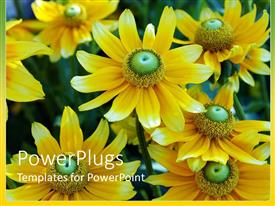 PowerPlugs: PowerPoint template with cute yellow and green flower sprouting in garden