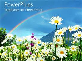 PowerPlugs: PowerPoint template with daisies and flowers growing in meadow with rainbow in blue sky and mountain background, nature