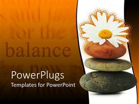 PowerPoint template displaying daisy flower resting on three Zen stones