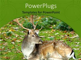 PowerPoint template displaying dapple deer sitting in green field with beautiful autumn leaves