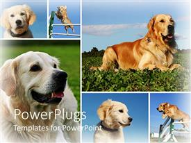 PowerPlugs: PowerPoint template with day light view of six dogs playing on the grass