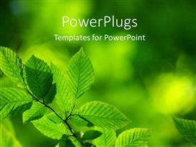 PowerPlugs: PowerPoint template with day time view of a branch of green mint leaves