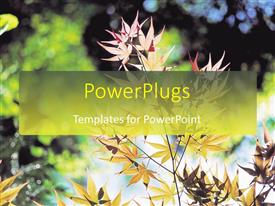 PowerPlugs: PowerPoint template with day time view of lots of dried plant branches