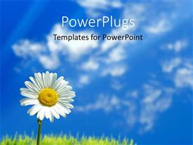 PowerPlugs: PowerPoint template with a day time view of a single white flower