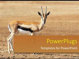 PowerPoint template displaying a deer in a safari park and place for text