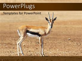 PowerPoint template displaying a deer with soil in the background and place for text