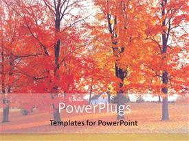 PowerPlugs: PowerPoint template with depiction of autumn with beautiful maple trees in garden