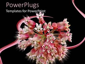 PowerPoint template displaying depiction of a bunch of pink flowers on a black background