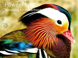 PowerPoint template displaying depiction of a colorful bird with a blurry background