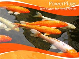 PowerPlugs: PowerPoint template with the depiction of a fish farm with a number of various fishes