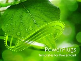 PowerPoint template displaying a depiction of green leaf with dew drops and its reflection