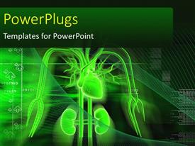PowerPlugs: PowerPoint template with depiction of human anatomy with heart, kidney and nerves on a digital background