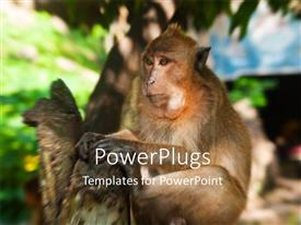 PowerPoint template displaying depiction of Monkey playing on tree at Phuket Thailand