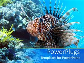 PowerPlugs: PowerPoint template with a depiction of sea life with beautiful fish and sea plants