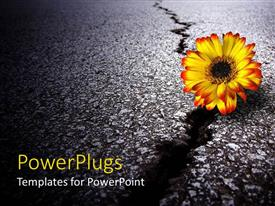 PowerPlugs: PowerPoint template with a depiction of a sunflower on a cracked road