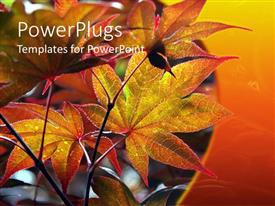 PowerPlugs: PowerPoint template with a depiction of various kinds of leaves along with golden background