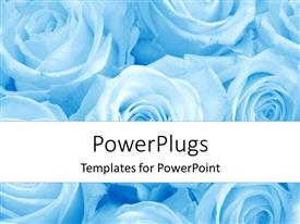 PowerPlugs: PowerPoint template with depiction of white colored roses on bluish hue background